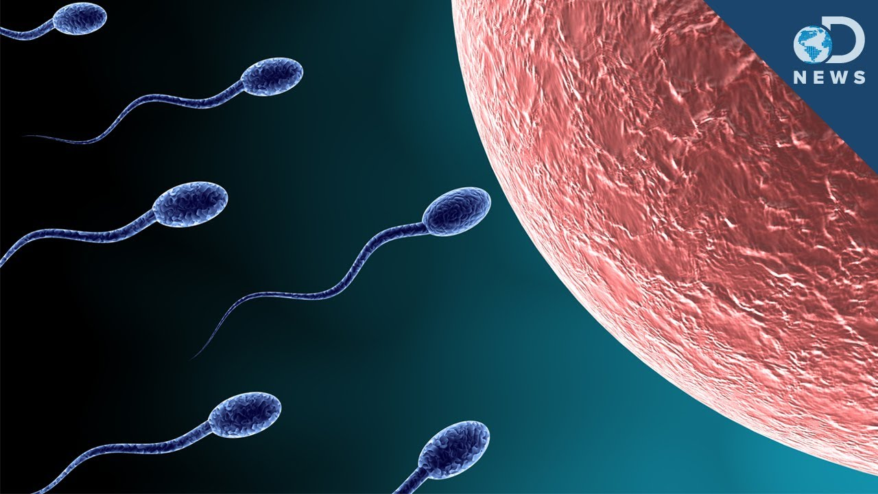 sperm an egg entering