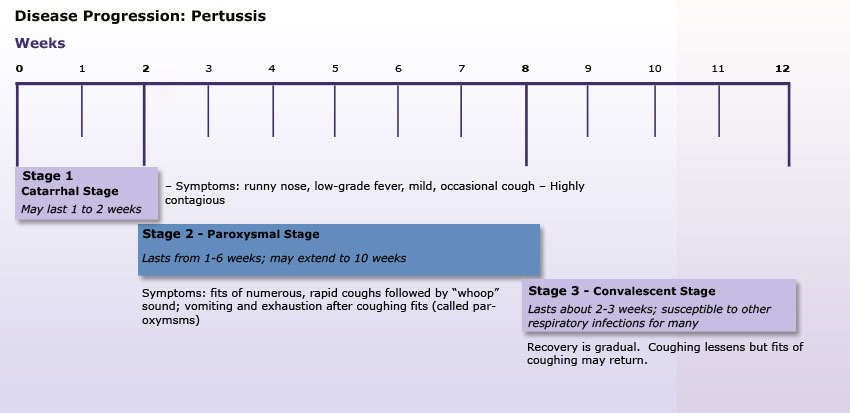 adult in pertussis